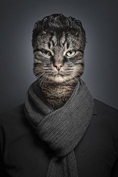 Funny Portraits Of Cats Dressed As Their Owners - DesignTAXI.com