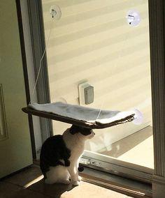 「猫あるある」10