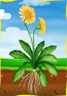 Flower Activities For Kids, Spring Activities, Art Bulletin Boards, Paper Flowers Craft, Teacher Inspiration, Daffodils, Trees To Plant, Spring Flowers, Kindergarten