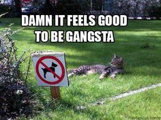Feels good to be gangsta