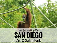 Tips for visiting the San Diego Zoo.   A great destination!  Request a quote for your next vacation from Destinations in Florida at  http://destinationsinflorida.com/pinterest