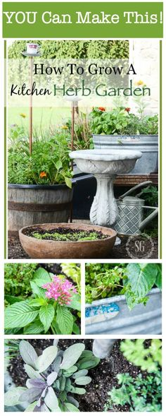 HOW TO GROW A KITCHEN HERB GARDEN- Step-by-Step easy instructions for herbs right outside your door all summer long!
