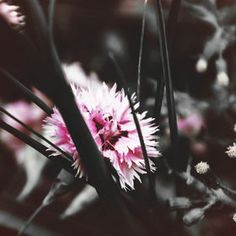 Photo Dark Summer by Mia Jitaru on 500px