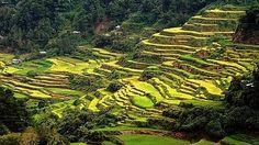 Rýžové terasy na Luzonu mnozí považují za div světa