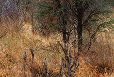 Camouflage Animals by Art Wolfe - Imgur