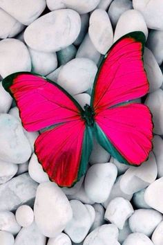 Que maravilha!!! Screen Wallpaper, Cellphone Wallpaper, Beautiful Butterflies, Pink Butterfly, Butterfly Wings, Butterfly Wallpaper, Amazing Photography, Have A Beautiful Day, Cute Animals