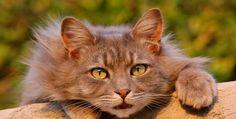 cat cat 9