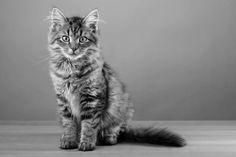 Ein weiteres Cotier Lieblingsmodel! www.cotier.de Lifestyle Magazin rund ums Tier