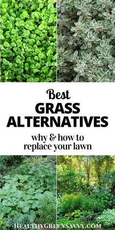 Grass alternatives can save money, time, and water and also reduce greenhouse gas emissions. It's not difficult to convert some of your lawn to these eco-friendly grass alternatives! #grassalternatives #ecofriendly #ecologicallandscaping #gardening #lawnalternatives #ecofriendlyyard Formal Gardens, Outdoor Gardens, Outdoor Life, Outdoor Ideas, Outdoor Decor, Grass Alternative, Landscape Design, Garden Design, Topiary Garden