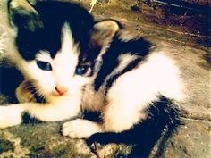 blue eye's kitten