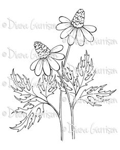 """Available on Etsy - """"Coneflowers"""" Digi Digital Stamp by Diana Garrison. $3.00"""
