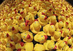 ducks racing