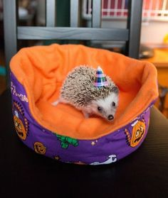 And this teeny hedgie who is celebrating her first birthday. | 42 Pictures That Will Make You Almost Too Happy