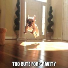 Too cute for gravity for sure!