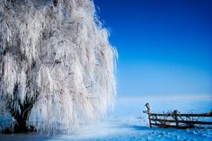 Photos By Tag: winter - PhotoClassical.com