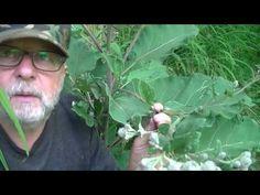 Długowieczność bez chorób - część 1 - YouTube Remedies, Survival, Health, Youtube, Nature, Plants, Beautiful, Krakow, Castles