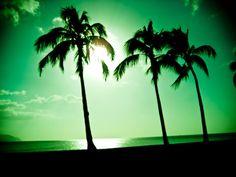 Palms # i need a VK