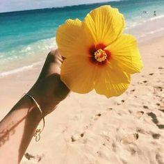 Imagen de flowers, summer, hibiscus, aloha and beach Disney Instagram, Instagram Girls, Hibiscus, Vibes Tumblr, Tropical Vibes, Art Music, Pretty Flowers, Summer Flowers, Yellow Flowers