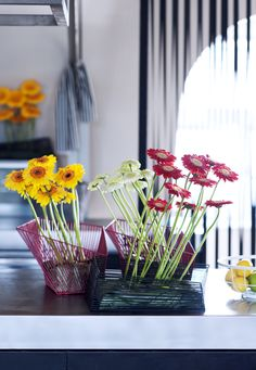 The gerbera has no symbolic meaning, but why should that matter? With its colourful and sunny appearance it makes your home more cheerful and welcoming straightaway!