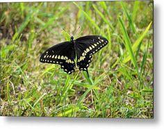 Swallowtail 7724 Metal Print by Bonfire #Photography