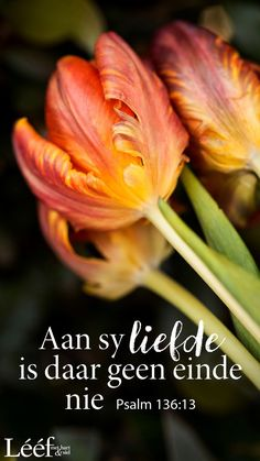 Me Quotes, Qoutes, Afrikaans Quotes, Biblical Quotes, Affirmations, Bible, Faith, Words, Christ