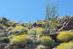 California Travel Blog - Anza borrego state park east of San Diego, ca