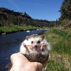 30 Must-Follow Animals on Instagram