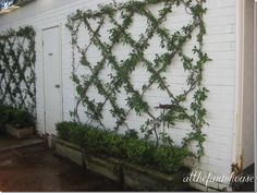 would love to do this in my potager garden espelier