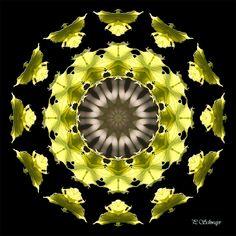 Mandala ''Blätter'' von KreativesbyPetra     Mandala auf Leinwand gespannt, mit schwarzen Seitenrand 2cm breit      #kreativesbypetra #Mandala #mandalaart #Natur #nature #fotografie #photography #naturfotografie #naturephotography #makro #macro #makrofotografie #macrophotography #Spiegelung #Spiegelungen #abstrakt #Abstract #Reflexion #adobephotoshop #photoshop #canon #farben #colours #Leinwand #canvas #blatt #blätter #leaf #leafs Mandala Art, Petra, Photoshop, Celestial, Canon, Outdoor, Mandalas, Macro Photography, Nature Photography