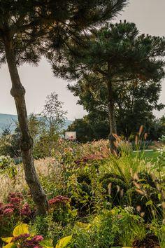 Plants, Garden Architecture, Nature, Homes, Plant, Planets