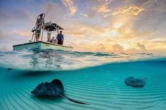 Скаты у побережья острова Большой Кайман, Каймановы острова