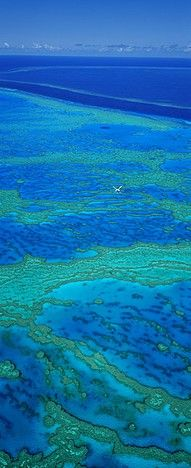 Great Barrier Reef, Australia - there's nothing else like it.  What an experience. Beautiful!