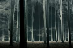 "Ghost web forest - Better on black: Press H Watch my slide-vid   <a href=""https://vimeo.com/138886353"">A Magical Journey</a> on Vimeo <a href=""http://larsvandegoor.com/"">WEBSITE</a>"