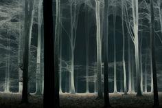 "Ghost web forest - Better on black: Press H Watch my slide-vid   <a href=""https://vimeo.com/138886353"">A Magical Journey</a> on Vimeo <a href=""http://larsvandegoor.com/"">WEBSITE</a>"