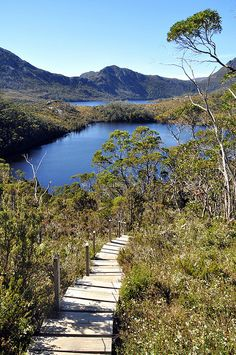 Cradle Mountain-Lake St Clair National Park, Tasmania, Australia by _Zinni_ on Flickr