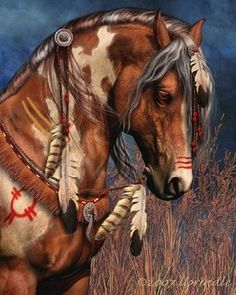 Topic: Apatche The Native American Tribe of Hounor - Wild Horse Mountain
