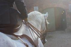 http://www.alexander-james.co.uk/products/9820/367/side-saddle-habits/everyday-elegance-side-saddle-habit.aspx