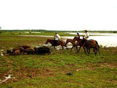 Ilha do Marajó - Brasil