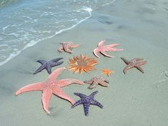 """Although sea stars live underwater and are commonly called """"starfish,"""" they are not fish. They are related to sand dollars, sea urchins, and sea cucumbers. Under The Water, Under The Sea, Starfish Story, Baby Starfish, Starfish Painting, Foto Art, Ocean Life, Starfish, Seahorses"""
