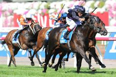 2013 Melbourne Cup winner, Fiorente, coomes from behind to win 2014 $1m Australian Cup at Flemington today