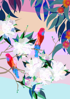 Evening Rosellas String Of Pearls, Summer Beauty, Peonies, Rooster, Rainbow, Sky, Wallpaper, Animals, Inspiration