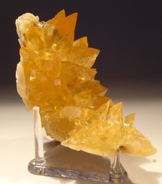 Calcite in Shell ~ Rucks pit ~ Florida