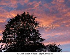 A large, old tree is silhouetted against a sky of pink clouds.