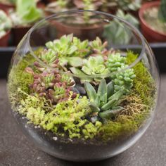 "Thesputnik, an 8"" orb that looks fantastic in any space, inner or outer. It's big enough to accommodate a full house of succulents and cacti. Just like the little Russian satellite for which it was named, this modern looking terrarium will capture the imagination of anyone who crosses its path. Www.juicykits.com ☺"