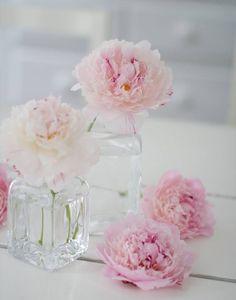 цветы, пастель, пионы, розовый