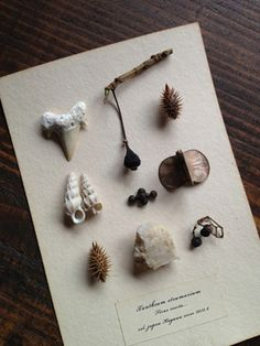Natural found objects Nature Collection, Nature Table, Witch Aesthetic, Nature Journal, Nature Crafts, Botanical Illustration, Natural History, Pottery, Inspiration