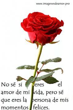29 Ideas De Rosas Rosas Imagenes De Amor Frases De Rosas