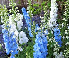 15 Easy To Grow Annual Flowers From Seed | Crafty For Home