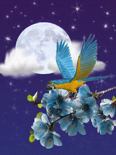 Lovely bird flying with a full moon as its back drop.