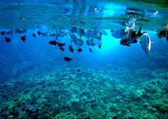 Snorkeling at molokini crater - been there done that!